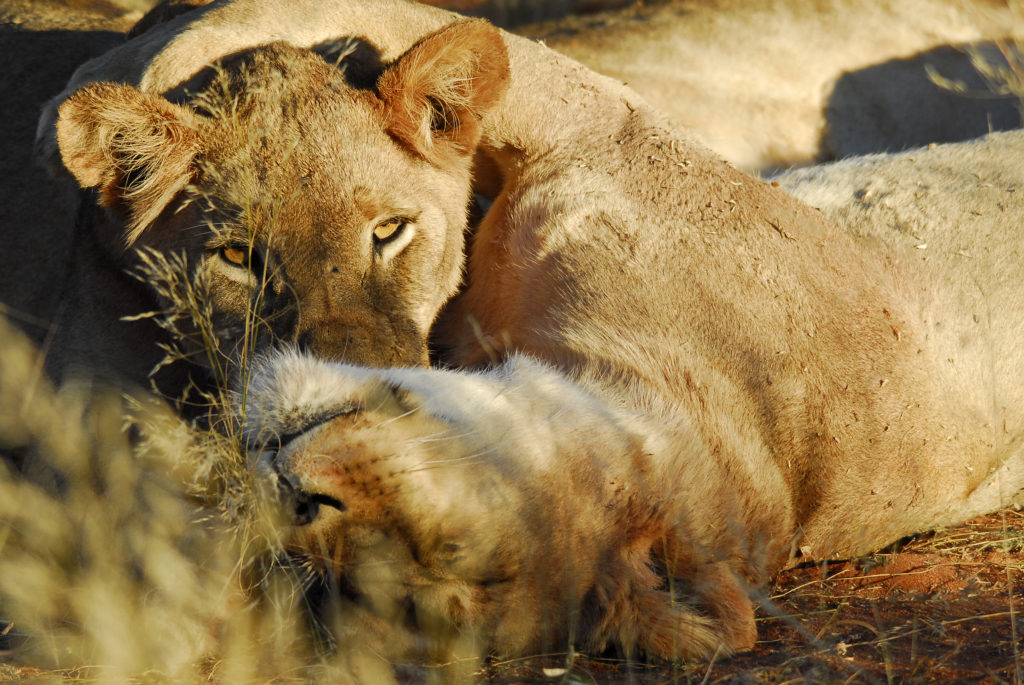Tswalu Kalahari Reserve | FINEST LIVING, the official blog of FINEST RESIDENCES
